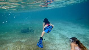 浮潜与护士鲨在巴哈马