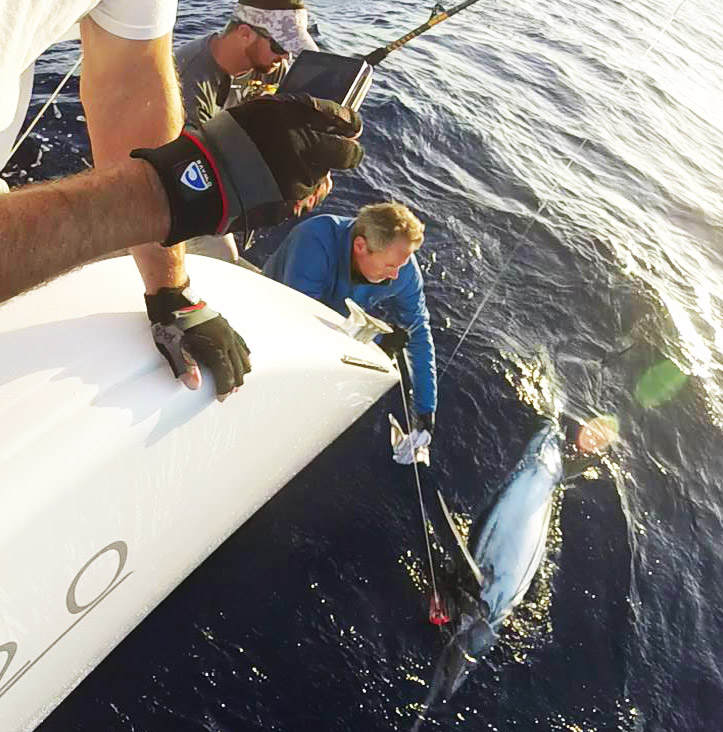 Giant Marlin Catch off the Atlantic Ocean with Captain Craig Doring